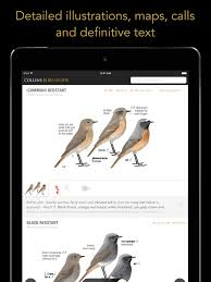 collins british bird guide app ranking and store data app annie