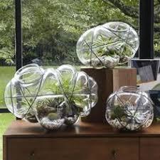 wood glass terrariums glass terrarium wood glass and terraria