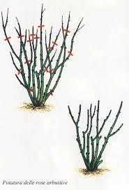 potare le ortensie in vaso come potare le cura delle cura delle piante
