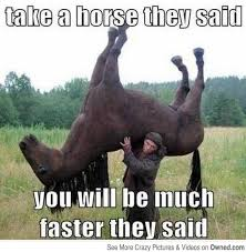 Gay Horse Meme - 15 very funny horse pictures