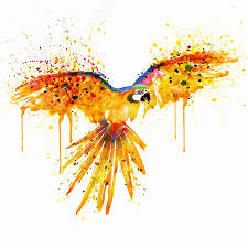 parrot art fine art america