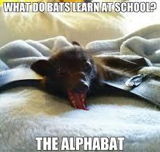 Bat Meme - a bat meme to brighten your weekend australian bat clinic