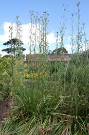 prairie moon nursery 43 best planting design 1 images on pinterest planting bee and