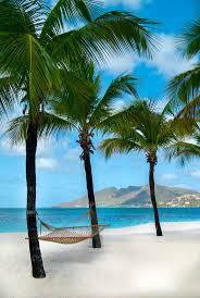best 25 palm tree island ideas on pinterest beach sunset palm island resort saint vincent and the grenadines