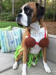 Halloween Costumes Boxer Dogs 30 Dog Costumes Images Animals Costumes
