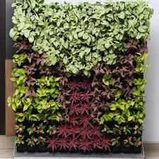 green walls solutions delhi vertical garden plants delhi sheel