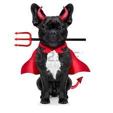 French Bulldog Costumes Halloween Costume Bulldog Stock Photos Royalty Free Costume Bulldog Images