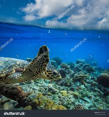 minecraft lets build floating water house creative modern part 1 maldivian tropical beach palms stock photos images pictures sea animal turtle floating underwater water line splits dining room