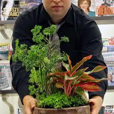 indoor plant arrangements the rainforest garden how to combine houseplants for easy indoor