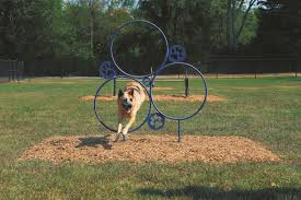 Backyard Agility Course Dog Agility Equipment Dog Agility Training Equipment Dog