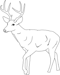 whittail deer coloring pages printable coloring 22410