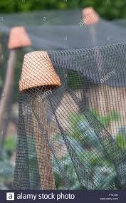terracotta pot over hazel sticks holding up protective netting in