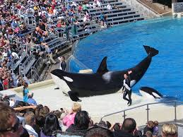 seaworld orlando could be the local theme park not ranked in