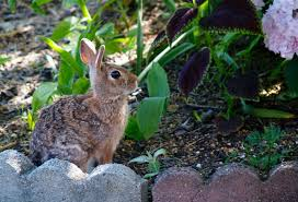 what is the best rabbit squirrel and deer repellent liquid