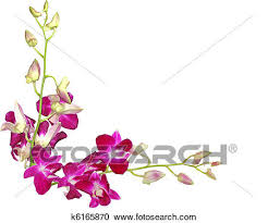 purple orchids stock photography of purple orchids k6165870 search stock photos