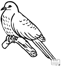 cuckoo bird birds cuckoos coloring pages kids coloring7