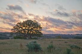 sunrise oak western fine art landscape photography texas hill