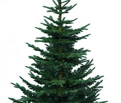artificial noble fir tree images
