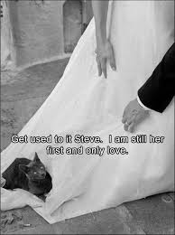 Black Girl Wedding Dress Meme - 71 best wedding humour images on pinterest funny stuff ha ha and