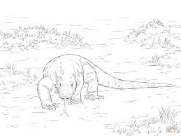 walking komodo dragon coloring page free printable coloring pages