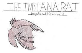 meet clementine u2013 the lrwp u0027s resident indiana bat lower raritan