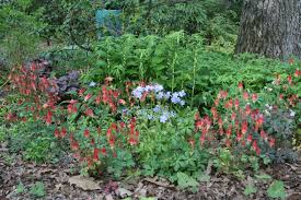 Flowering Shrubs New England - new england hummingbird plants new england habitat gardening blog