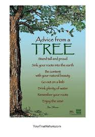 advice from a tree mini poster your true nature inc