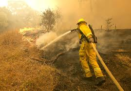 Wildfire Honey by Santa Rosa Fire How Fire Is Affecting The Marijuana Industry