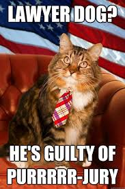 Lawyer Dog Meme - lawyer dog he s guilty of purrrrr jury patriotic lawyer cat
