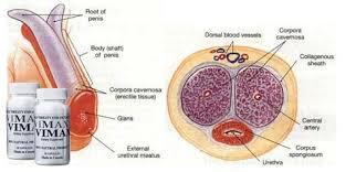 tentang khasiat vimax kapsul asli canada