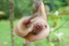 Cute Sloth Meme - 15 unbearably cute sloth pics to celebrate the international
