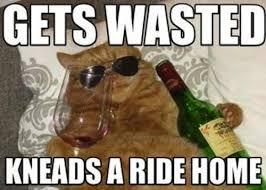 Wasted Meme - wasted kitty meme slapcaption com on we heart it