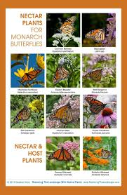 native plants and wildlife gardens 178 best gardening for butterflies u0026 other pollinators images on