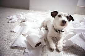 the 6 signs of separation anxiety in dogs rover com