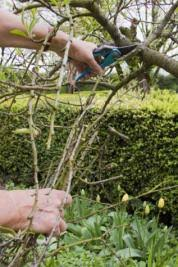 grow little fruit trees for big rewards this old house