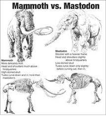 columbian mammoth wooly mammoth google museum mania