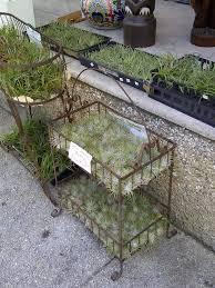 Shoo Rainforest Shop 76 best garden shop ideas images on garden center