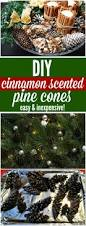 best 25 scented pinecones ideas on pinterest