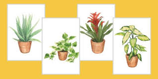 gardening tips how to garden and landscape