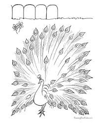 peacock colouring picture kids coloring pages 10 free printable