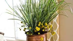 tips to care for indoor plants in the cold winter angie s list