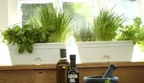 herb garden kit u2013 dresse club