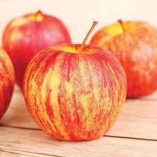 edible fruit fruit trees plants edible garden the home depot