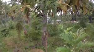 silver trees farmhouse karnataka