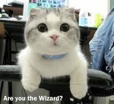 Are You A Wizard Meme - cybergata are you the wizard cats in memes