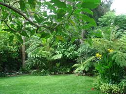 who needs to fly to the tropics when your backyard looks like
