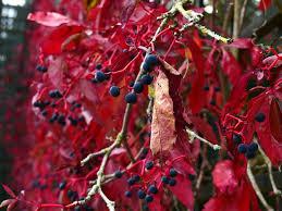 autumn flowers autumn flowers berries free photo on pixabay