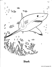 shark s sea animalse526 coloring pages printable