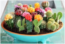 plantes pour bureau l énergétique des plantes voie intérieure