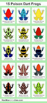 best 25 frogs ideas on pinterest animated frog natural